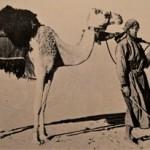 De Engelse ontdekkingsreiziger Wilfred Thesiger doorkruist de Rub al Khali kort voor de eerste olieboringen in de jaren '50 van de twintigste eeuw